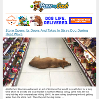 Store Opens Its Doors And Takes In Stray Dog During Heat Wave