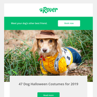 We found the perfect Halloween costume for your dog...