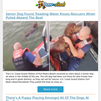 Senior Dog Found Treading Water Kisses Rescuers When Pulled Aboard The Boat