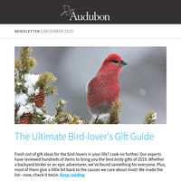 Gifts for Bird Lovers | Christmas Bird Count | Plover Comeback