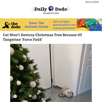 Cat won't destroy Christmas tree because of tangerine 'force field'