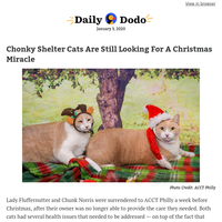 Chonky shelter cats are still looking for a Christmas miracle