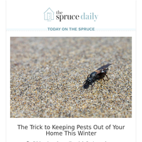 The Trick to Keeping Pests Out of Your Home This Winter