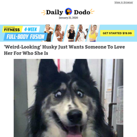 'Weird-looking' husky just wants someone to love her for who she is