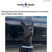 Therapy dog visits quarantined seniors to let them know they're not alone