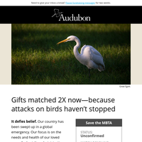 Incredibly, they're still going after birds [2X match]