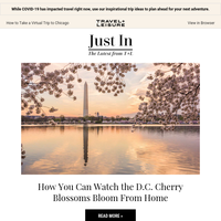 You Don't Have to Miss the D.C. Cherry Blossoms This Year