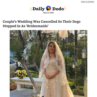 Couple's wedding was cancelled so their dogs stepped in as 'bridesmaids'