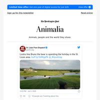Animalia: Bruno the bear's big summer quest