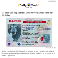 16-year-old dog gets his own driver's license for his birthday