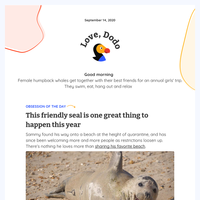 😍 This seal's happy face will turn your 2020 around