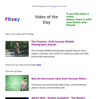 ★ Video of the Day & Quote of the Day - by Flixxy.com - The Finalists: 2020 Comedy Wildlife Photography Awards