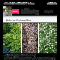 The Best Low-Maintenance Plants