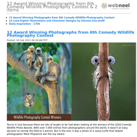 12 Award Winning Photographs from 6th Comedy Wildlife Photography Contest & 2 items