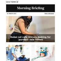 Dubai cat cafe rescues looking for 'purrfect' new homes