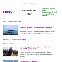 ★ Video of the Day & Quote of the Day - by Flixxy.com - Starlings Making The Shape Of A Giant Bird