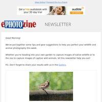 12 Top Wildlife & Animal Photography Tutorials