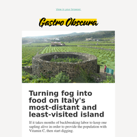 The ancient walled garden turning fog into food