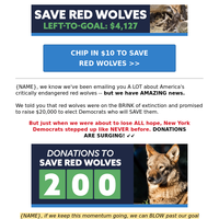 America's red wolves are saved!