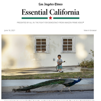 Essential California: Don't feed the wildlife