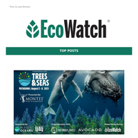 Earth's heat induced imbalance, brown pelicans are being attacked, Biden restore animal welfare, and Senate bans shark fins trade…
