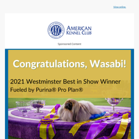 Congratulations Wasabi For Best In Show!!! 🏆