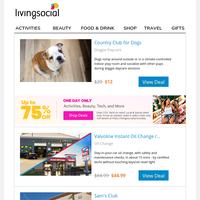 Doggie Daycare + Mega Sale