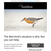 Help birds in crisis with your best gift