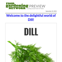 The Best Ways to Grow and Use Dill