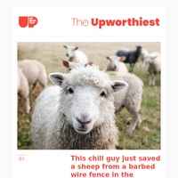 This chill guy just saved a sheep from a barbed wire fence in the coolest way imaginable