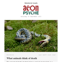 An animal's understanding of death; how to learn a language; and the American Aristotle