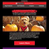 Keep your pet safe this Halloween